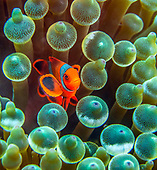 Papua New Guinea, Underwater