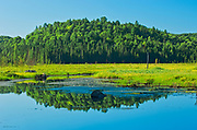 Reflection of boreal forest in wetland<br />