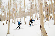 Backcountry skiers Judd MacRae (right) and Sterling Roop pass through an aspen grove in Uncompahgre National Forest, Colorado.