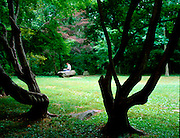2 trees are silhouetted in the foreground in a park like setting with a man reading on a stone bench in the background.