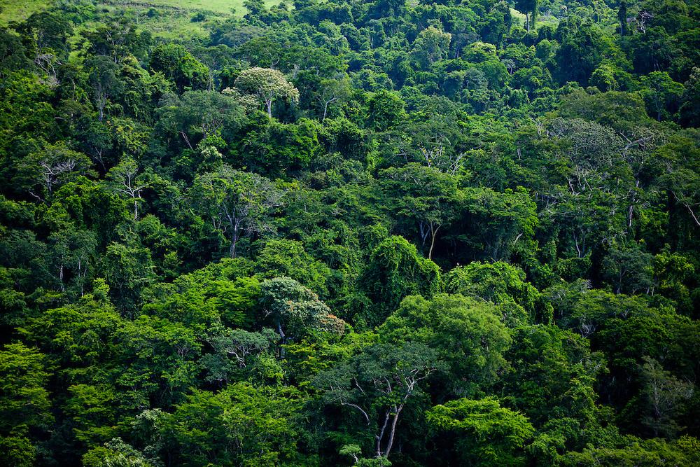 Volta Redonda_RJ, Brasil...Floresta da Cicuta em Volta Redonda, Rio de Janeiro...Cicuta Forest in Volta Redonda, Rio de Janeiro...Foto: JOAO MARCOS ROSA / NITRO