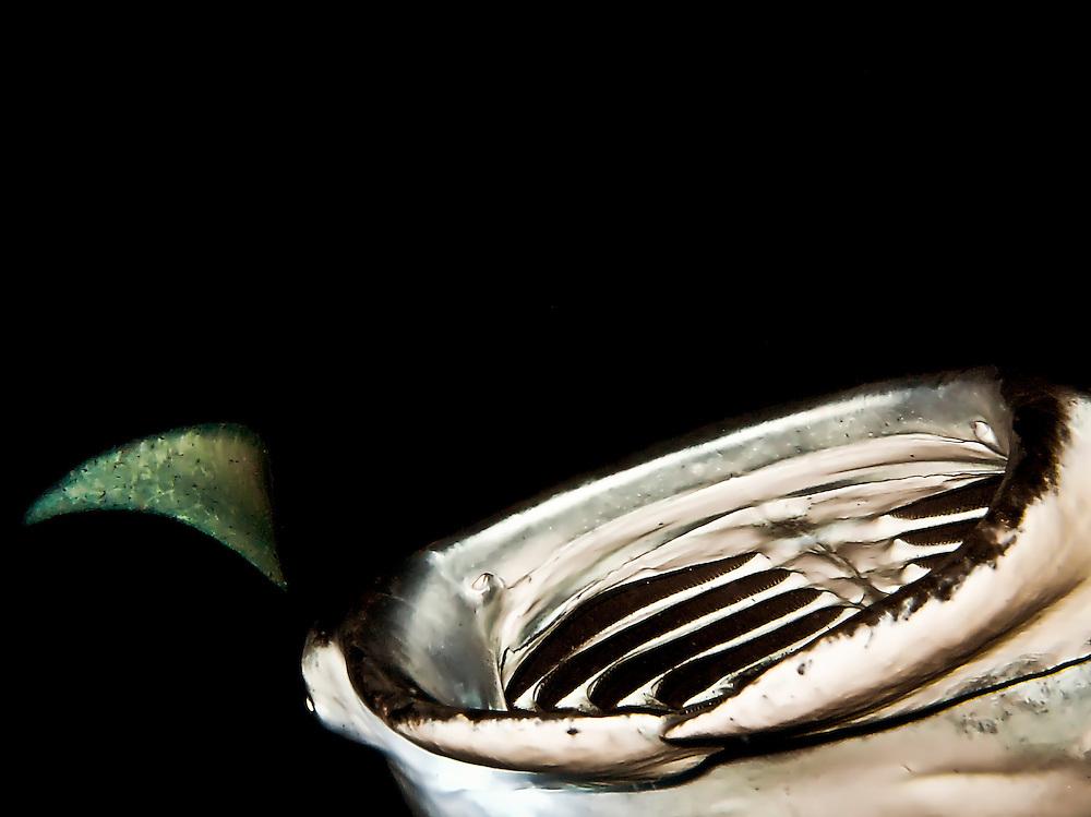 Large female manta ray feeds on plankton at night, off coast of Kona, HI.  Copyright 2008 Reid McNally.