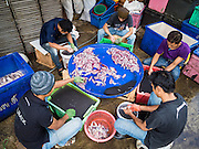 14 AUGUST 2015 - BANGKOK, THAILAND:  Workers sort squid in an alley next to Saphan Pla fish market in Bangkok. Saphan Pla fish market is the wholesale fish market that serves Bangkok. Most of the fish sold in Saphan Pla is farmed raised fresh water fish. The market is open 24 hours but it's busiest in the middle of the night and then again from about 7.30 until 11 in the morning.       PHOTO BY JACK KURTZ