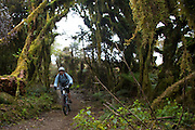 biking the timber trail - one of new zealand's classic cycle trails pureora to ongarue cycle tour photos travel photography by fleaphotos