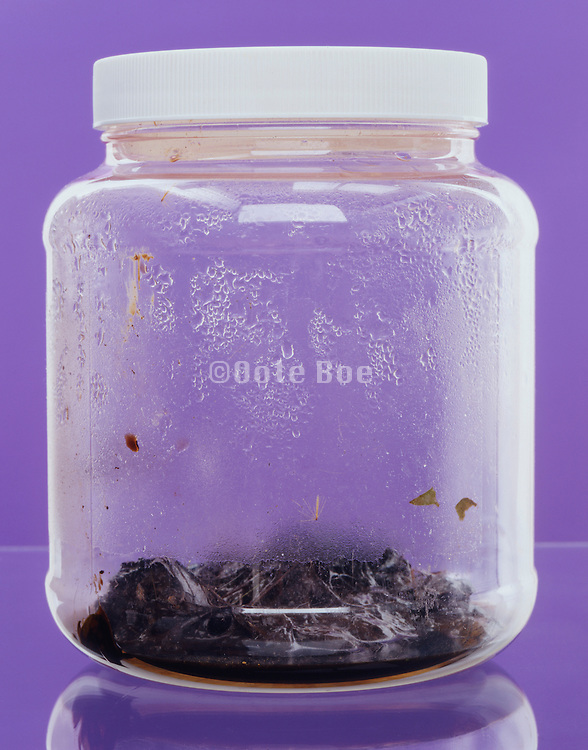 plastic jar with rotten produce against purple background