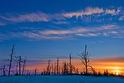 Trees in burn at sunrise<br />Sandilands Provincial Forest<br />Manitoba<br />Canada