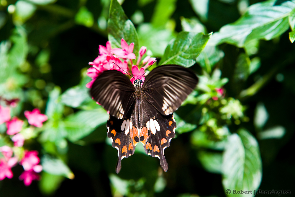 A butterfly feeding on a garden flower in sunlight surrounded by green fauna.