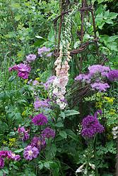 Digitalis 'Sutton's Apricot' with Thalictrum 'Black Stockings' and Allium 'Purple Sensation'