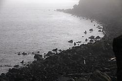 USA ALASKA ST PAUL ISLAND 9JUL12 - General view of Northern Fur Seals (Callrhinus ursinus) at the Reef Point rookery on the island of St. Paul in the Bering Sea, Alaska.....Photo by Jiri Rezac / Greenpeace....© Jiri Rezac / Greenpeace