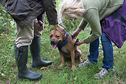 Dog owners re-attach a harness to their Staffordshire Bull Terrier after passing through a countryside stile, on 10th September 2018, near Lingen, Herefordshire, England UK.