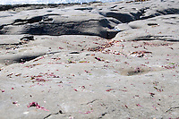 Close up of limestone rocks on Inis Oirr Island the Aran Islands County Galway Ireland