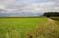 Rural landscape in Alsace, France.