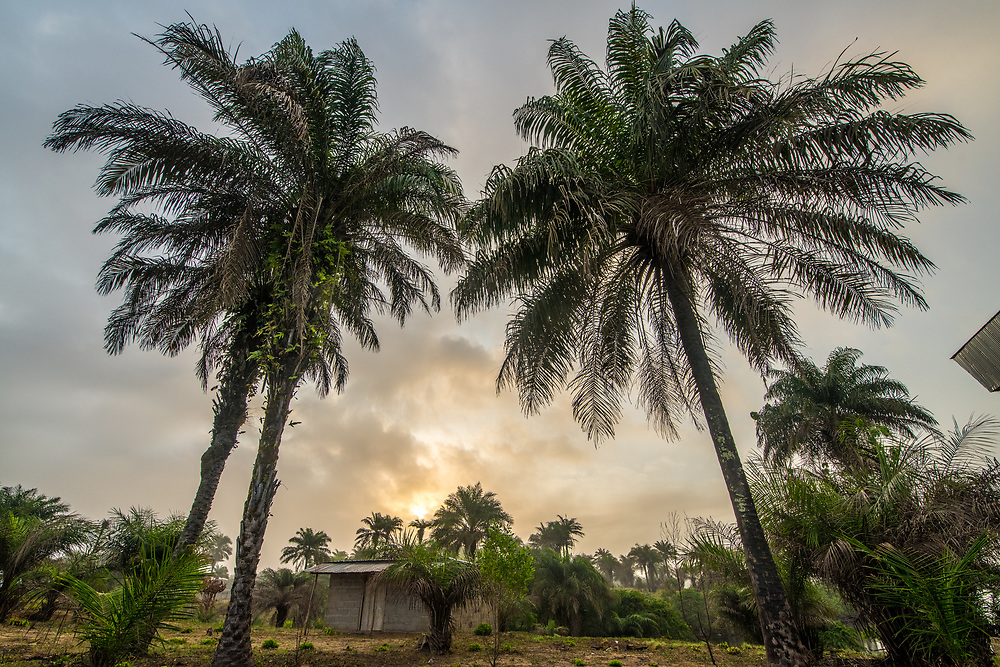 The Sun sets behind palm trees in Ganta Liberia