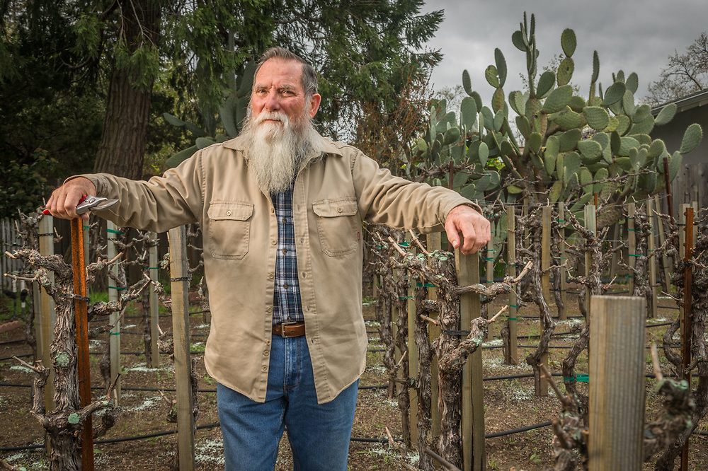 """We bought this house in 1998 and our first vintage was in 2001...we grow cabernet and merlot grape and put up 90 bottles a year.  Our kids come in the spring to help bottle and in the fall to harvest.""  -Richard Uschyk in his front yard vineyard in Calistoga."