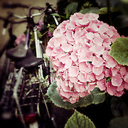 Flowery bike shed, Paris, France