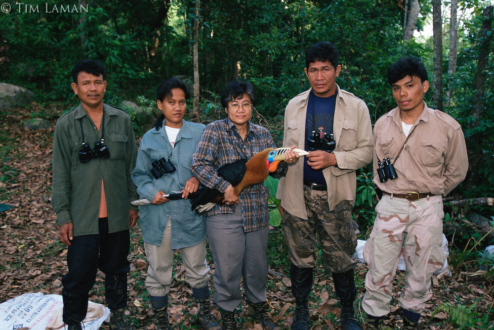 Hornbill research team led by Dr. Pilai Poonswad hold a captured Rufous-necked Hornbill (Aceros nipalensis).  Huai Kha Khaeng Wildlife Refuge, Thailand