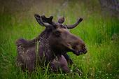 Alaska Wildlife and Nature
