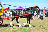 Class 17 - Single Heavy Horse Turnout in harness with Agricultural