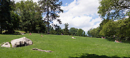 Meadow at Cedar Hill in Central Park
