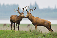Hubei - Shishou Milu deer reserve