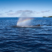 Rainbow created by diffraction of sunlight in a the mist of a humpback whale's breath (Megaptera novaeangliae). Photographed in Vava'u, Kingdom of Tonga.