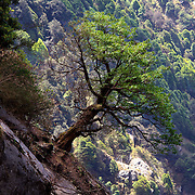 A collection of trees from around the world.  Trees witness the history of time passing and mother earth changing.