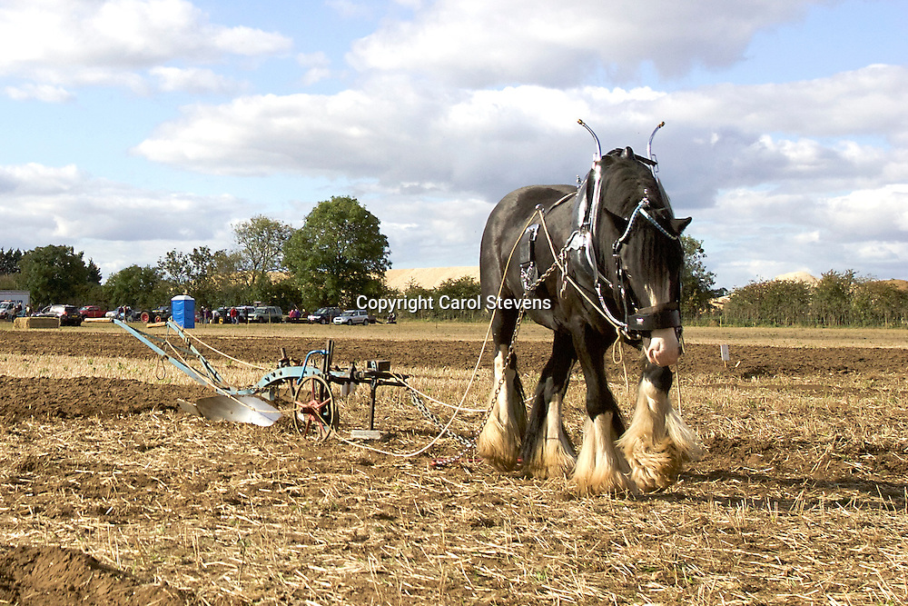 Northern Heavy Horse Society Ploughing Match 2016