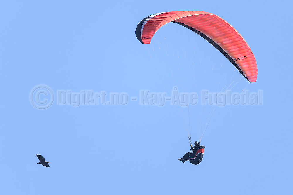Paraglider chasing a eagle | En paraglider som tar opp jakten på ørnen.