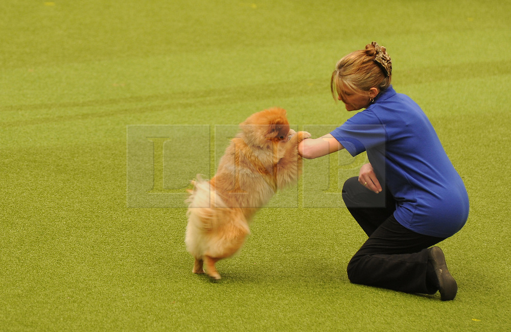 © Licensed to London News Pictures. 11/03/2012.  A member of a dog display team plays hide and seek with her dog in the main arena at the 2012 Crufts final in the Birmingham NEC Arena.  With over 28,000 dogs taking part the tension is high as the competition draws towards the prestigious title of  Best in Show. Photo credit: Alison Baskerville/LNP
