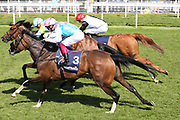 NAUSHA (7) ridden by Andrea Atzeni and trained by Roger Varian winning the The Group 3 Tattersalls Musidora Stakes over 1m 2f (£100,000) in a three way finish during the first day of the Dante Festival at York Racecourse, York, United Kingdom on 15 May 2019.