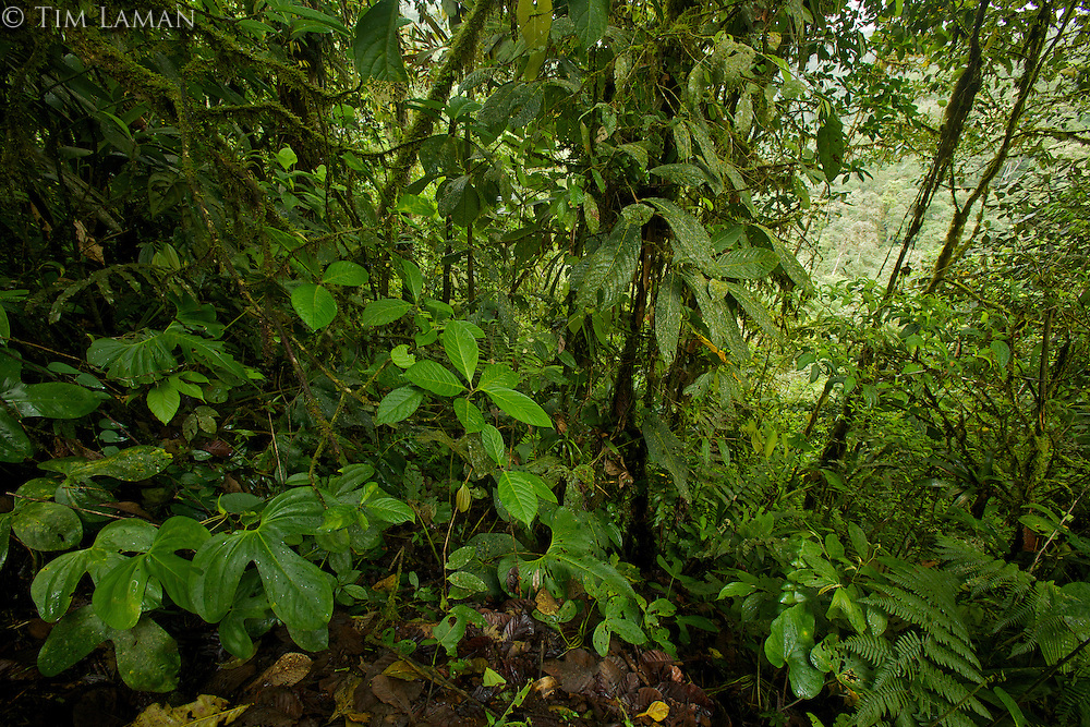 Cloud forest interior view<br />