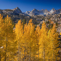 Golden aspen trees below the peaks of the Sierra Nevada near Lake Sabrina, Inyo County, California.