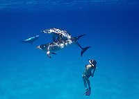 snorkeler/ free diver swimming with Atlantic Spotted Dolphin (Stenella frontalis), Bahamas