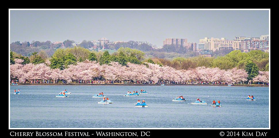 Paddle boats fill the tidal basin<br /> 2014 Cherry Blossom Festival - Washington DC<br /> April 13, 2014