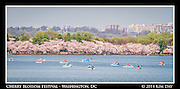 Paddle boats fill the tidal basin<br /> 2014 Cherry Blossom Festival - Washington DC<br /> April 13, 2014
