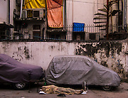 14th September 2015, New Delhi. A guard/driver sleeps in front of dust-sheet covered cars in New Delhi, India on the 14th September 2015<br /> <br /> Sleeping in the outdoors is common in Asia due to a warmer climate and the fact that personal privacy for sleep is not so culturally ingrained as it is in the West. New Delhi (where most of these images were taken) is a harsh city both in climate and environment and for those working long hours, often in hard manual labour, sleep and rest is something fallen into when exhaustion overwhelms, no matter the place or circumstance. Then there are the homeless, in Delhi figures for them from Government and NGO sources vary wildly from 25,000 to more than 10 times that. Others public sleepers may simply be travellers having a siesta along the way.<br />  <br /> <br /> PHOTOGRAPH BY AND COPYRIGHT OF SIMON DE TREY-WHITE, photographer in Delhi<br /> <br /> + 91 98103 99809<br /> email: simon@simondetreywhite.com