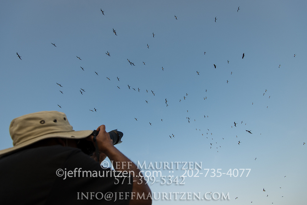A man takes a photo of a fleet of magnificent frigatebirds.