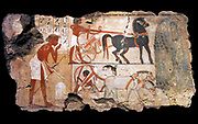 Nebamun was the accountant in charge of grain at the great temple at Amun at Thebes (modern Karnak).  This scene from his tomb-chapel shows officials inspecting fields.  Nearby two chariots for the party of officials wait under the shade of a sycomore-fig tree.