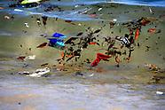 Water Pollution Australia