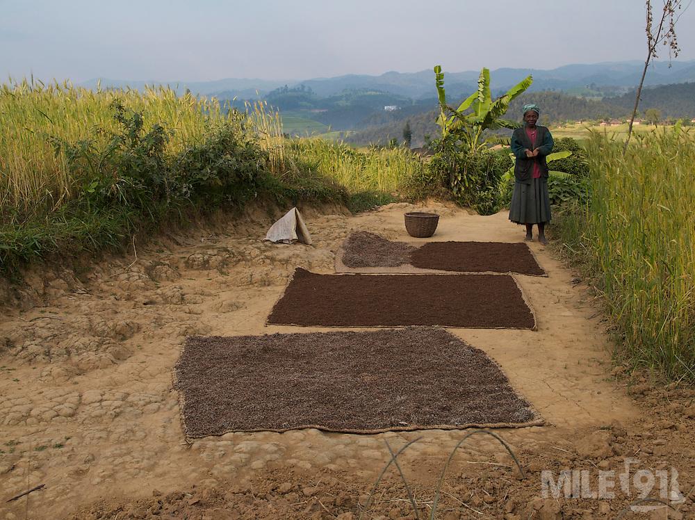 A lady dries her crops in the sun, Rwanda