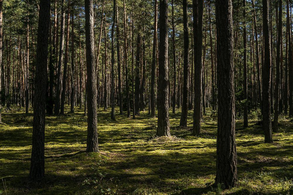 Forest along a bicycle path on Sunday, September 18, 2016 in Belozhevskaya Pushcha National Park near Kamieniuki, Belarus.