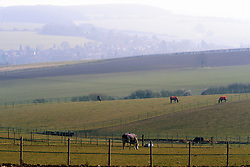 © Licensed to London News Pictures. 04/03/2013.Early Spring Sun Today (04.03.2013) in Kent..Horses grazing in a field off Crockenhill Lane, Near Eynsford, Kent. .Photo credit : Grant Falvey/LNP