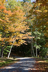 Fal colors trees along a gravel road l in Weathersfield, Vermont.