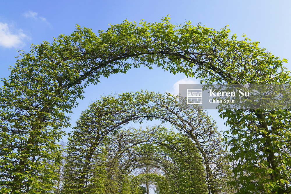 Arch made by trees, Keukenhof Gardens, Amsterdam, Netherlands