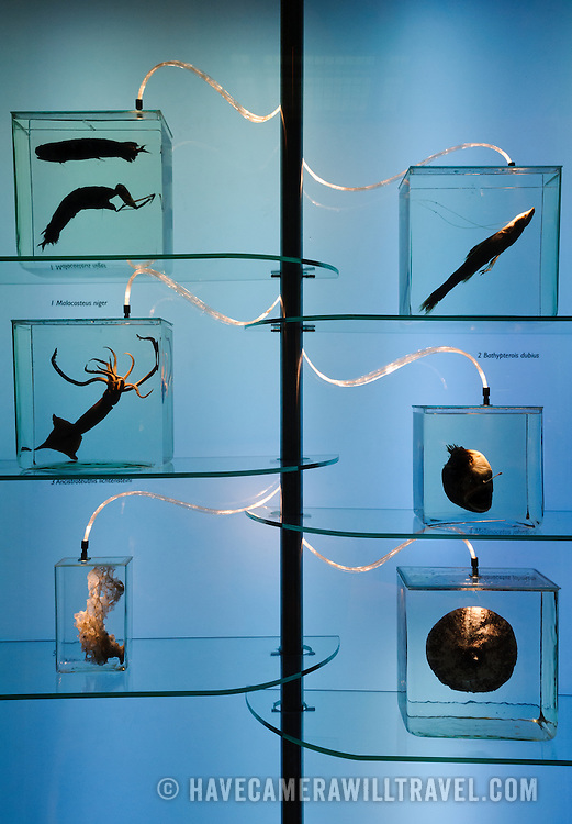 Deep sea animals on display at the Smithsonian Institution's National Natural History Museum in Washington DC.