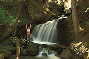Solo woman performing various yoga moves outside near a waterfall in the forest.Solo woman performing various yoga moves outside near a waterfall in the forest.