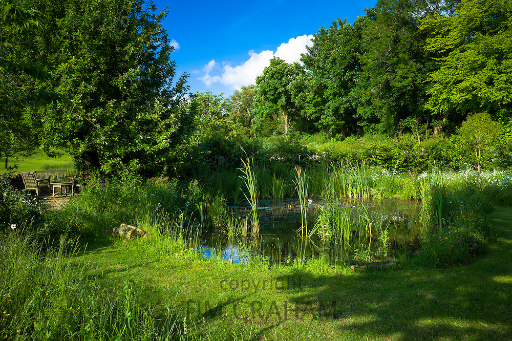 Garden wildlife pond in summer in country garden in Swinbrook, The Cotswolds, England, United Kingdom