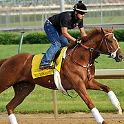 I'll Have Another works for the Kentucky Derby and at Churchill Downs in Louisville, Kentucky on May 3, 2012.