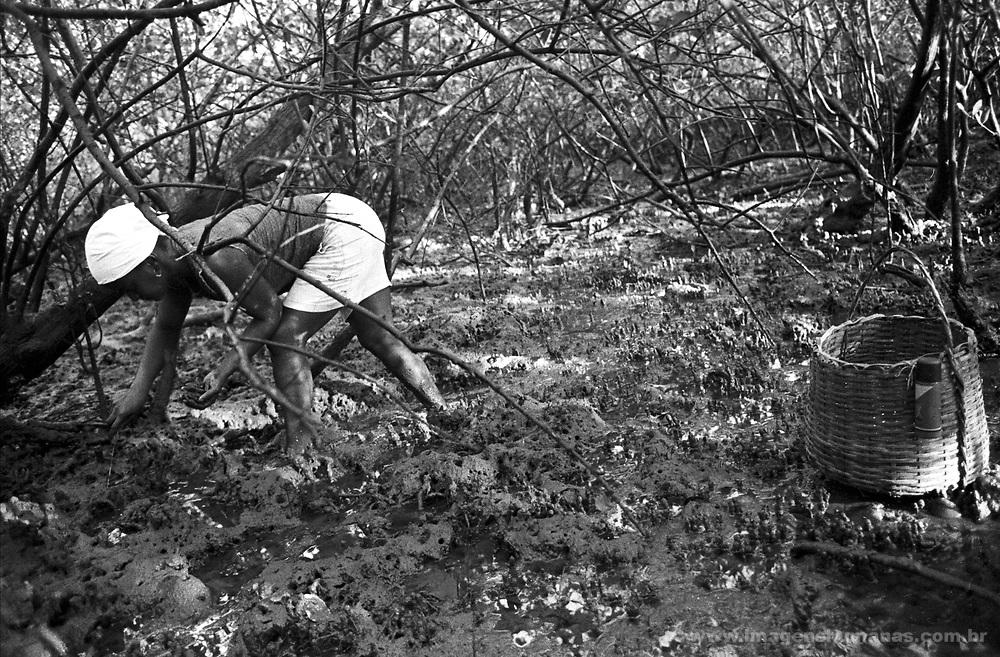 marisqueira no mangue de maragogipe..bahia..marisqueira in the maragogipe swamp  ..bahia..marisqueira no mangue de maragogipe..bahia..marisqueira in the maragogipe swamp  ..bahia