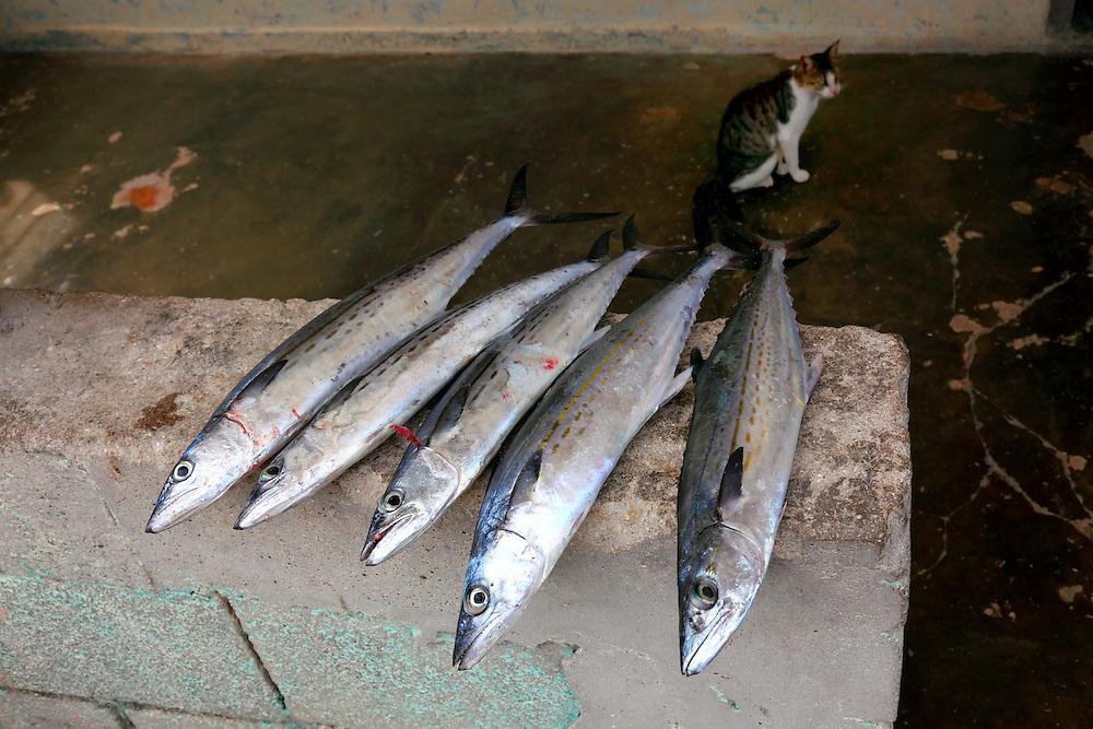 Cat and fish in Santa Cruz del Norte, Mayabeque, Cuba.